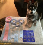 Maeve's puppy wins